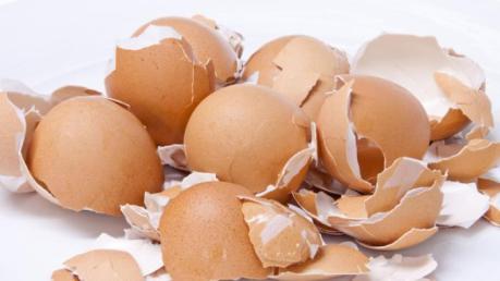 kulit telur1
